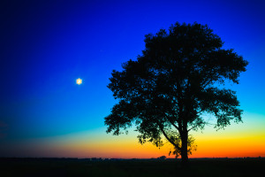 Sunset With A Silhouette Of A Lonely Tree