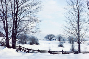 Winter - Farm